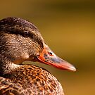Head of the duck by Josef Pittner