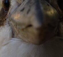 Australian Kookaburra - I like birds! Sticker
