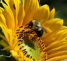 Sunny Days, Buzzing My Cares Away... by Tracy Faught