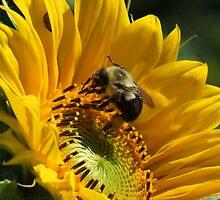Sunny Days, Buzzing My Cares Away... by Tracy Wazny