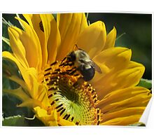 Sunny Days, Buzzing My Cares Away... Poster