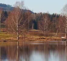 Västansjö Reflections by Tim Fenton