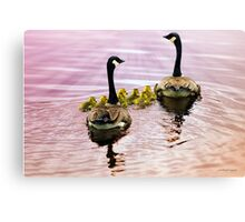 Going Home for the Night (Canada Geese) Canvas Print
