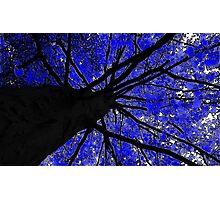 Midnight Tree Photographic Print