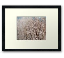 Ice dusted tree Framed Print