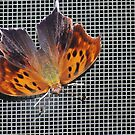 Question Mark Butterfly by Michele Markley