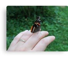 Red Admiral Buttefly Canvas Print