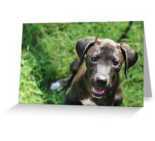 Rescue Pup Greeting Card