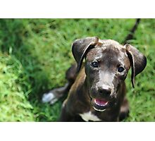Rescue Pup Photographic Print