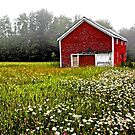 Red Barn - Field of White Daisies by T.J. Martin