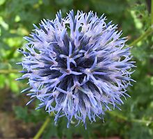 Cottage Garden Blue Flower by Donniwoo