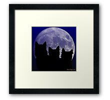 Black Cats of the Night Framed Print
