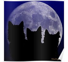 Black Cats of the Night Poster