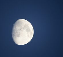 Early Evening Moon  by DEB VINCENT