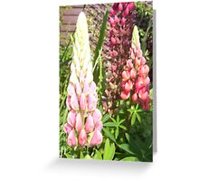 Cottage Garden Lupin Greeting Card