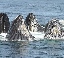 Satisfied Humpback Whales #3 by Gina Ruttle  (Whalegeek)