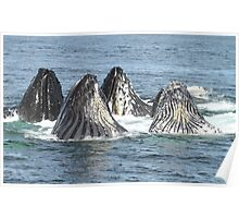 Satisfied Humpback Whales #3 Poster