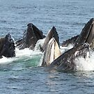Satisfied Humpback Whales #2 by Gina Ruttle  (Whalegeek)