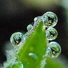 It's in the Drop II by Melzo318