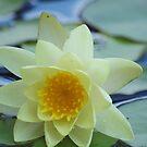 Pretty Lily by Melzo318
