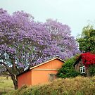 Colors of Upcountry Maui, Hawaii by ZIGSPHOTOGRAPHY