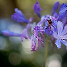 Busy Bee by NEmens