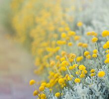 Sunshine flowers by BeatrizGR