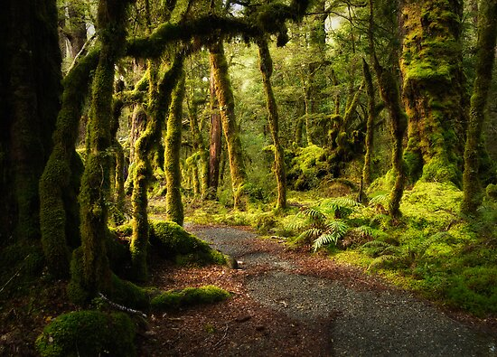 Quot Enchanted Forest Fiordland National Park Quot Posters By