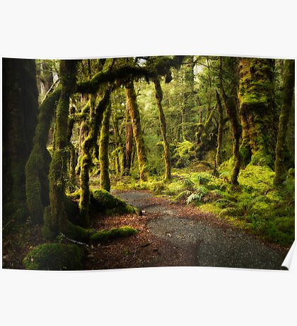 Enchanted Forest - Fiordland National Park Poster