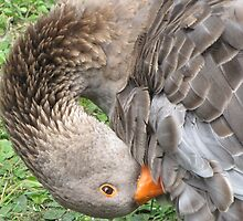 you ruffle my feathers by Leeanne Middleton