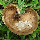 mushroom heart by Leeanne Middleton