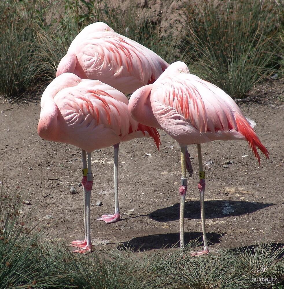 Pink Sleepers by Soulmaytz