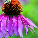 Red Coneflower - Bumble-Bee by T.J. Martin