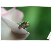 Cute frog peeking out of pink rose Poster