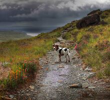 Toby in the Hills by Paul  Gibb