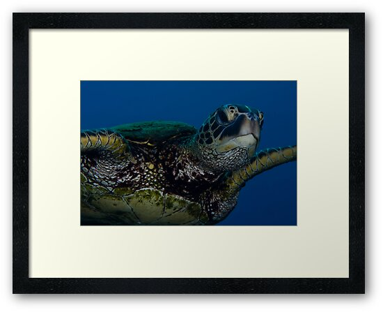 Green Turtle by Todd Krebs