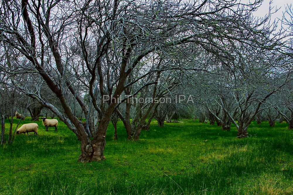"""""""Winter In The Orchard"""" by Phil Thomson IPA"""