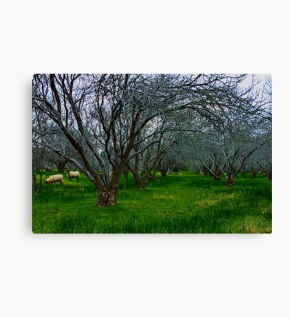 """Winter In The Orchard"" Canvas Print"