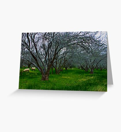 """Winter In The Orchard"" Greeting Card"