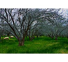 """Winter In The Orchard"" Photographic Print"