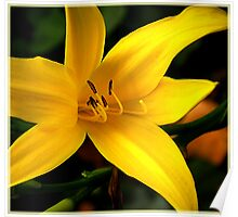 The yellow lilly Poster