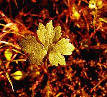 Golden Leaf by kenspics