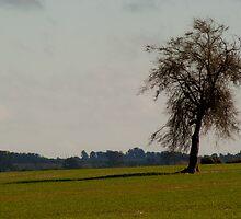 A tree by Gabriel Skoropada