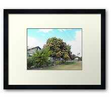 Mango Tree in Bloom Framed Print