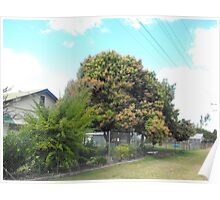 Mango Tree in Bloom Poster