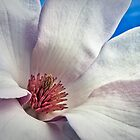 Magnolia by Samuel Gundry