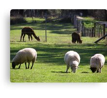 farms animals Canvas Print