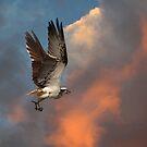 The Osprey Whistle by byronbackyard