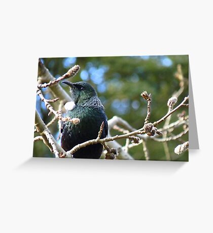 Just had my hair done what do you think! - Tui - Invercargill - NZ** Greeting Card