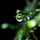 """Dew Drop"" by Husky"